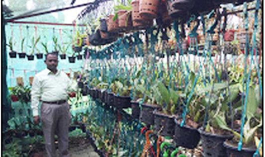 <span style='color:#000;font-size:18px;'>আহমাদ সেলিম</span><br/> সুগন্ধা নার্সারীতে বেকারদের কর্মসংস্থানের সুযোগ