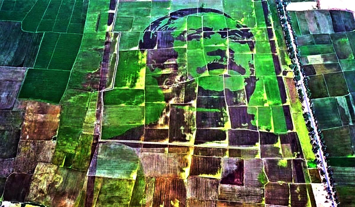 গিনেস বুকে স্থান পাচ্ছে 'শস্যচিত্রে বঙ্গবন্ধুর প্রতিকৃতি'